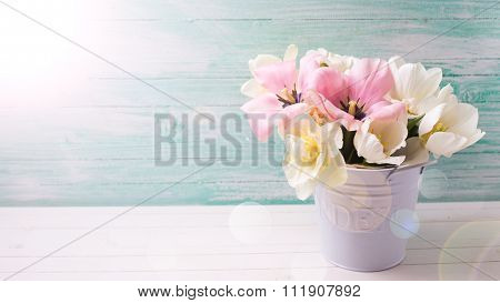 Fresh  Spring White And Pink  Tulips And Narcissus In White Bucket