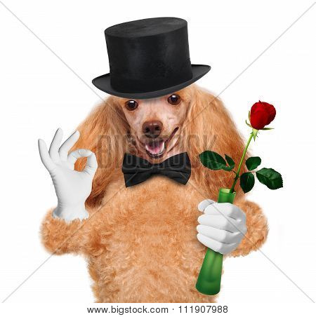 Dog with flower.