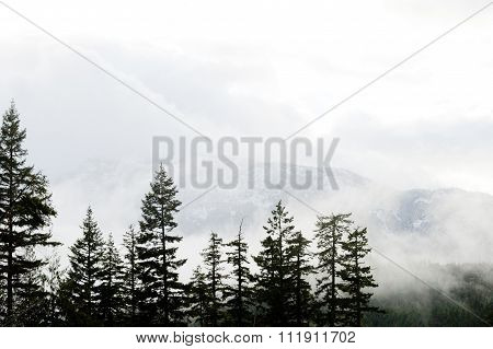 Misty Mountain View