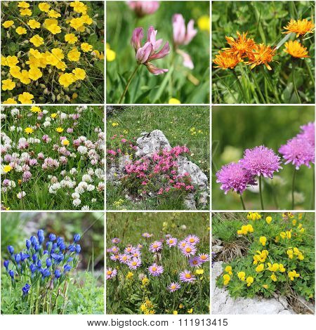 Alps Flora collage