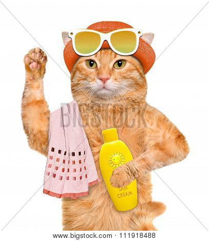 Cat with sunblock. Isolated on white.