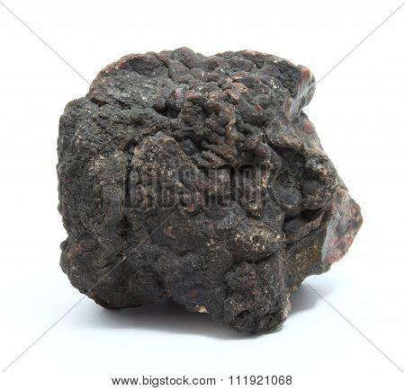 Coprolite