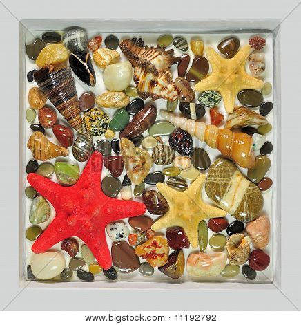 Picture from natural sea stones and cockleshells