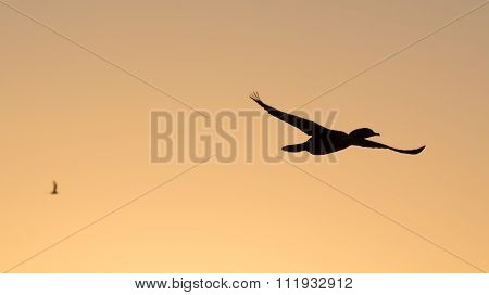volando en el atardecer- flying in the sunset