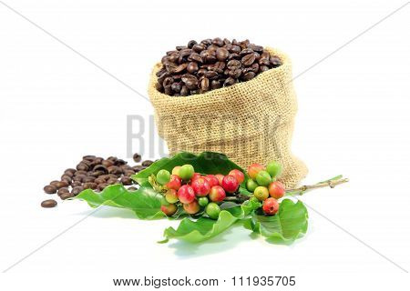 Roasted coffee beans in burlap sack with red and green coffee beans berries.