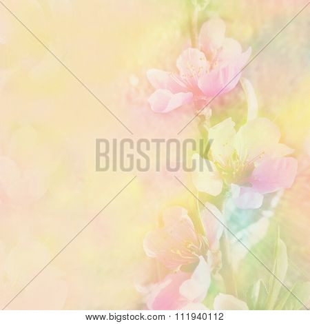 Floral  Greeting Card With Peach Flowers On Grunge Stained Hazy Background In Pastel Colors