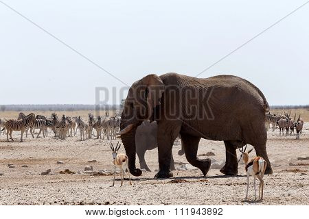 Crowded Waterhole With Elephants
