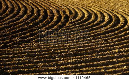 Furrows In A Field