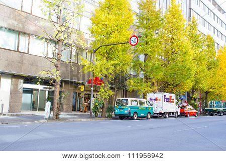 Roadside ginkgo trees in Tokyo Japan