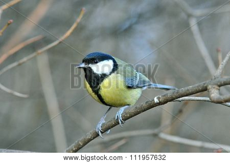 The great tit. Autumn scenery in the park.
