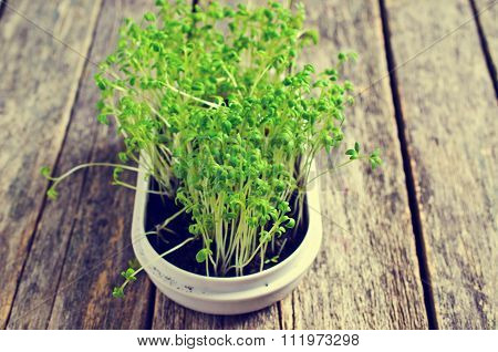 Sprouts Fresh Cress