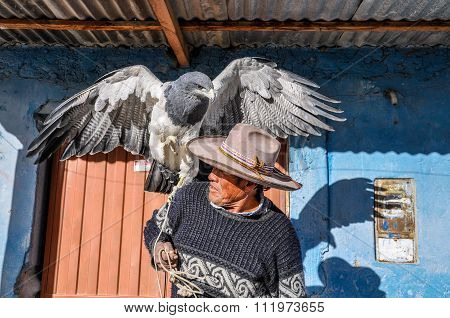 Local Man With An Eagle In The Colca Canyon, Peru