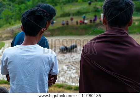 Two person from behind watching two buffalos in the field fighting