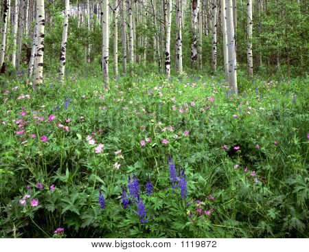 Flowers&Aspens