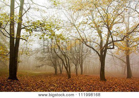 Mist In Forset