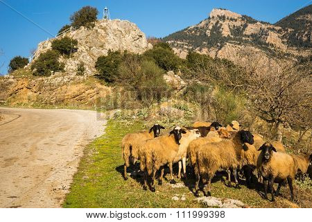 Herd Of Sheep On A Mountain Road