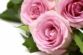 image of pink rose  - pink roses bouquet isolated on white background - JPG