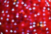 Defocused Maple Leaves Background (bokeh)