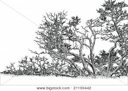 Tree Graphic Drawing