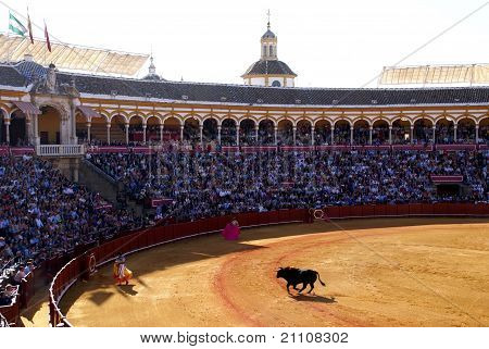 Sevilla Bullfight