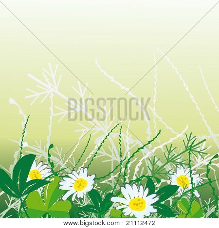 White Camomiles In Green Grass