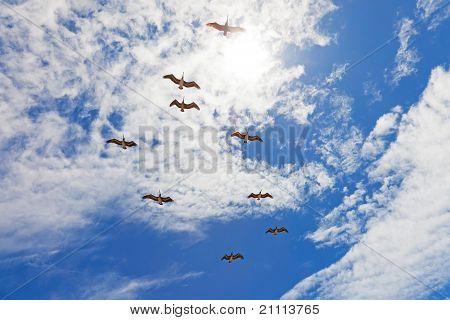Nueve Pelicanos volando en azul cielo nublado