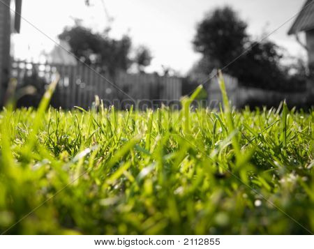 Short Green Grass