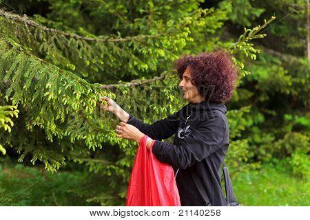 Woman Picking Fir Buds