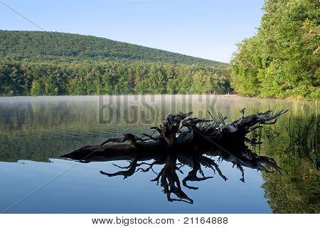 Reflexões no Lago de alfarroba