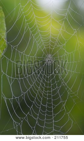 Diamant Web