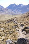 stock photo of workhorses  - Mule train carrying loads in a broad valley of the Cordillera HuayhuashAndes Peru South America - JPG