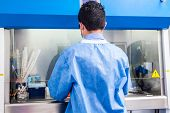 Young Scientist Working In A Safety Laminar Air Flow Cabinet At Laboratory poster