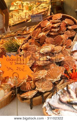 Fresh Scallops Or Coquilles In Their Shells