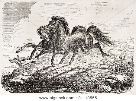 Siamese twin horses in the Jardin d'Acclimatation, Paris. Created by Gerusez, published on L'Illustration, Journal Universel, Paris, 1863