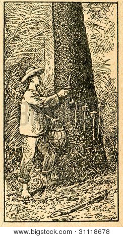 Harvesting caoutchouc - old illustration by unknown artist from Botanika Szkolna na Klasy Nizsze, author Jozef Rostafinski, published by W.L. Anczyc, Krakow and Warsaw, 1911