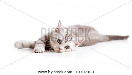 Mentira triste gatito tabby británico