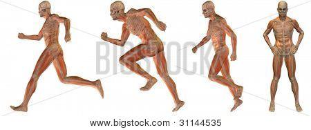 Ilustración de anatomía de hombre conceptual de alta resolución sobre fondo blanco para médico, medicina, salud,