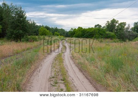 Rural road in pine forest in evening time