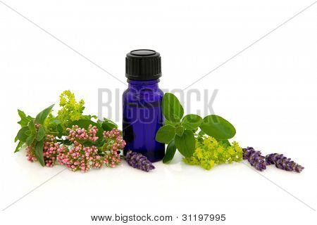 Lavender herb,valerian, ladies mantle flower heads with marjoram leaf sprigs and aromatherapy blue glass bottle isolated over white background.