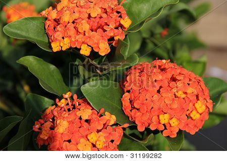 Orange flowers that stand in the fair criticism.