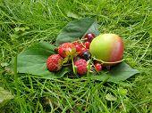 Fresh Fruits. Fruit Harvest. Fresh Berries. Fresh Fruit. poster