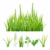 Green Grass. Fresh Garden Elements Nature Vector Pictures Of Herbs And Leaves. Fresh Growth Grass, G poster