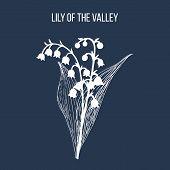 Lily Of The Valley Convallaria Majalis , Medicinal Plant. Hand Drawn Botanical Vector Illustration poster
