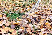 Cleaning Of Fallen Leaves In The Courtyard With Fan Rakes poster