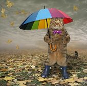 Cat In Blue Rubber Boots On Leaves poster