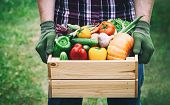 Farmer Holds In His Hands A Wooden Box With A Vegetables Produce On The Green Background. Fresh And  poster