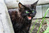 A Black Kitten In The Yard Saw Danger. Kitten Defensive Reaction poster