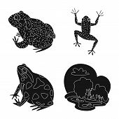 Isolated Object Of Fauna And Reptile Logo. Collection Of Fauna And Anuran Stock Bitmap Illustration. poster