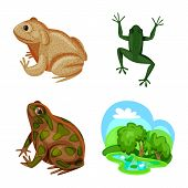 Bitmap Illustration Of Frog And Anuran Sign. Collection Of Frog And Animal Stock Symbol For Web. poster