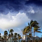 group of tall palm trees waving in wind and residential buildings over stormy sky in Deerfield Beach poster